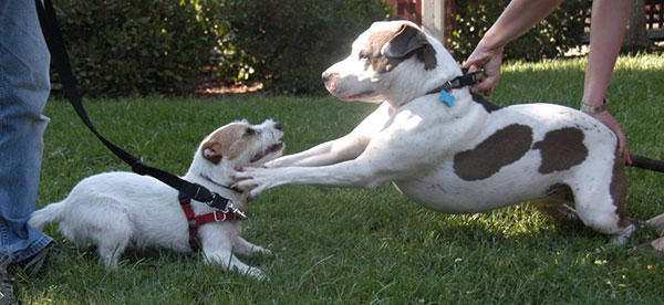Does Your Dog Have Problems With Fighting Other Dogs