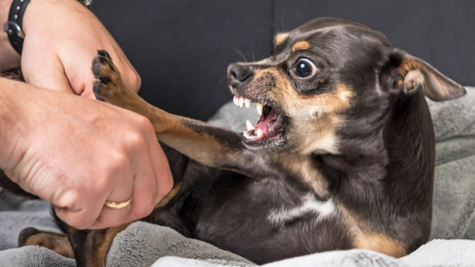 Dog Aggression Toward Owner