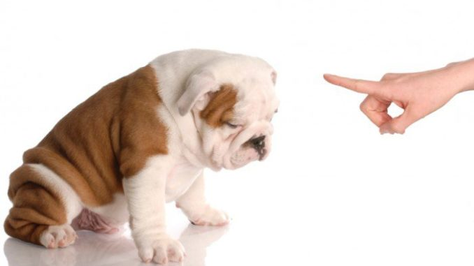 Disciplining Your Puppy