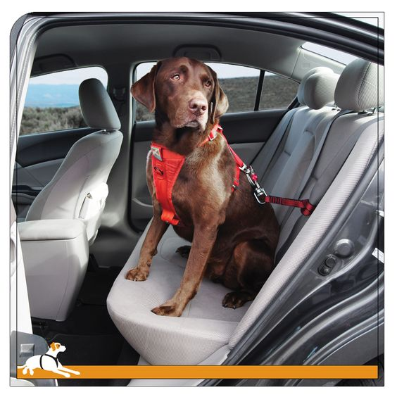 Dog Car Containment Harness