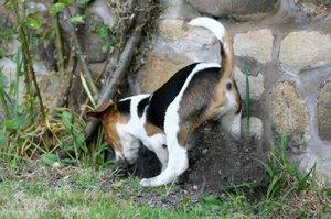dog burying food
