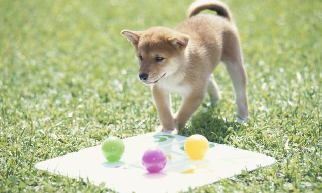 Do Dogs Learn By Trial And Error