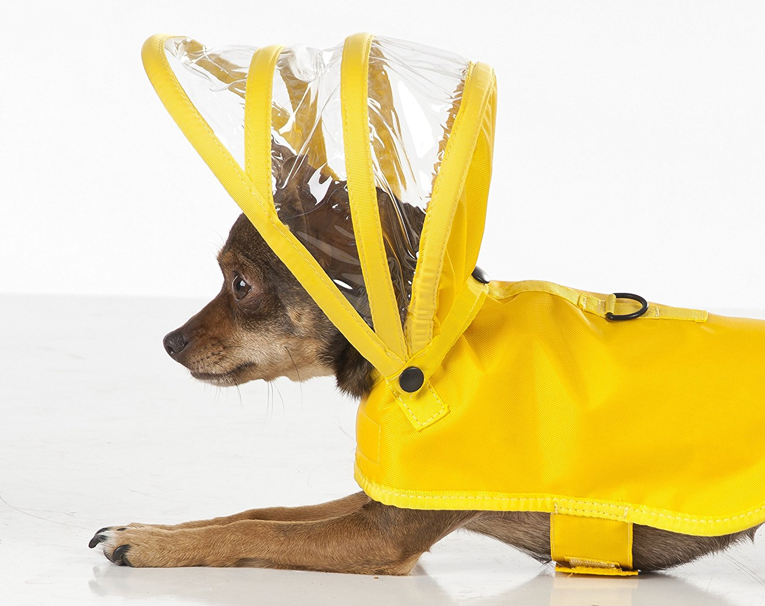 dog-raincoat-by-pushi-pushi
