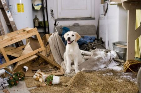 Dog's Destructive Behavior
