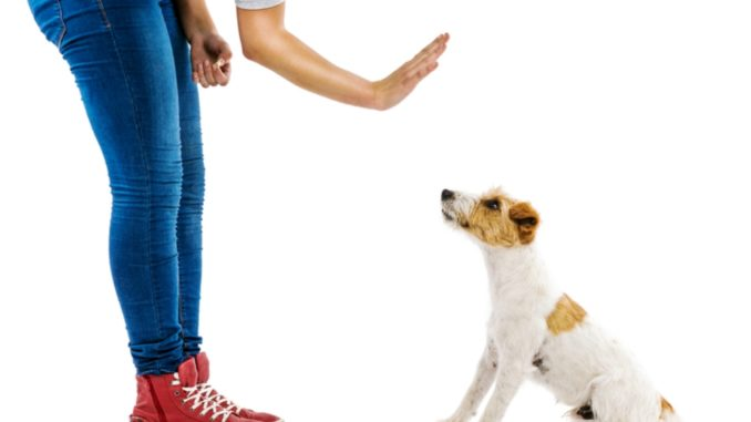 Hand Signals In Dog Obedience Training
