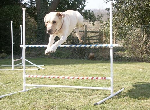 How To Train Your Dog For The High Jump