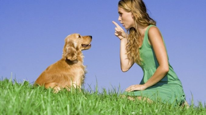 Voice Commands for Dog Training