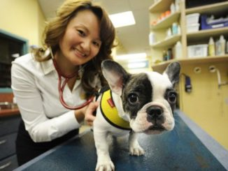 French Bulldogs - Health Concerns You Should Be Aware Of