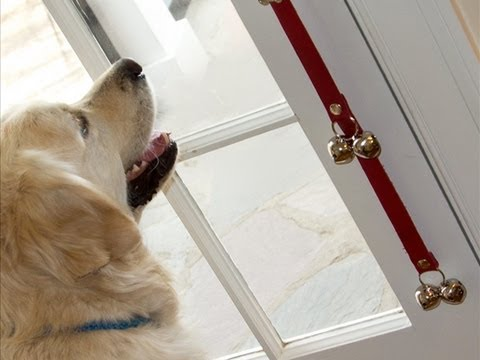 Training your dog to ring a door bell to ask to go outside pooch this eventshaper