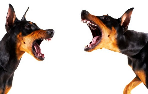Proven Techniques For Training Your Dog To Stop Barking